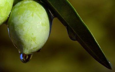 aceite de oliva virgen extra sierra espadan
